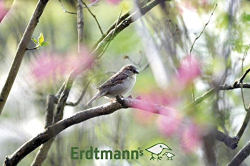 "Erdtmanns 520168 Futterhaus ""Little Bird"" - 5"