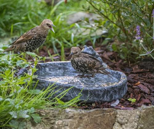 Vogeltränke mit Frosch Wasserbecken Steinguss Schiefergrau - 2
