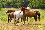 Naturendo Pferde Leinöl frisches, 5 Literkaltgepresstes Lein Öl aus 100% natürlicher Leinsaat - 4