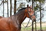 Naturendo Pferde Leinöl frisches, 5 Literkaltgepresstes Lein Öl aus 100% natürlicher Leinsaat - 7
