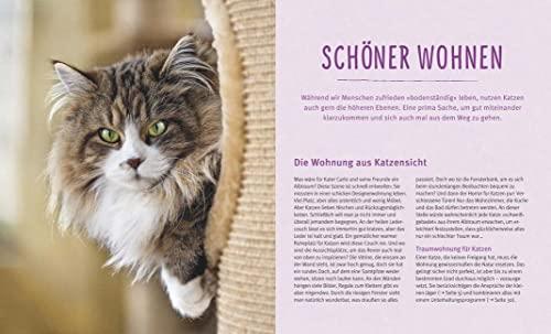 Wohnungskatzen: Wohlfühl-Basics für kleine Tiger - 6