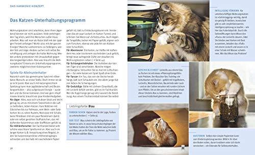 Wohnungskatzen: Wohlfühl-Basics für kleine Tiger - 7