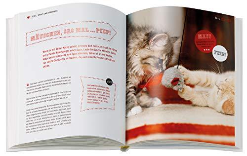 Das Katzenbuch für Kids: verstehen, versorgen, spielen - 2