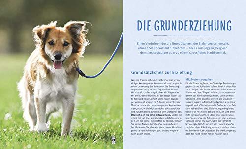 Hundeerziehung: Gut erzogen – fit für den Alltag - 5