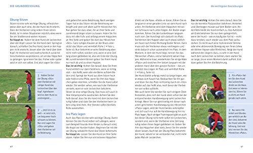 Hundeerziehung: Gut erzogen – fit für den Alltag - 3