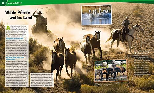 WAS IST WAS Band 27 Pferde. Von frechen Fohlen und wilden Mustangs (WAS IST WAS Sachbuch, Band 27) - 4