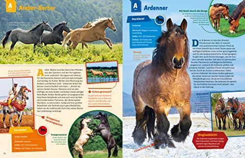 WAS IST WAS Pferde und Ponys: Reiten, Zucht und Pferdesprache (WAS IST WAS Edition) - 9
