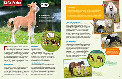 WAS IST WAS Pferde und Ponys: Reiten, Zucht und Pferdesprache (WAS IST WAS Edition) - 3