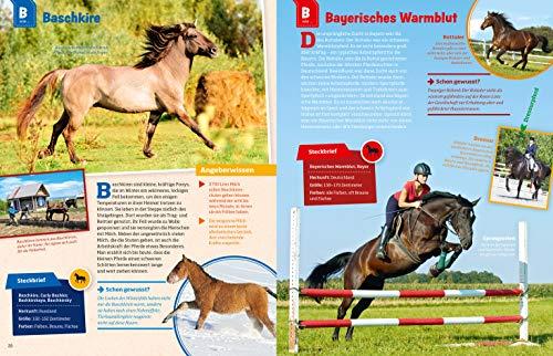 WAS IST WAS Pferde und Ponys: Reiten, Zucht und Pferdesprache (WAS IST WAS Edition) - 6