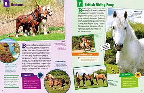 WAS IST WAS Pferde und Ponys: Reiten, Zucht und Pferdesprache (WAS IST WAS Edition) - 12