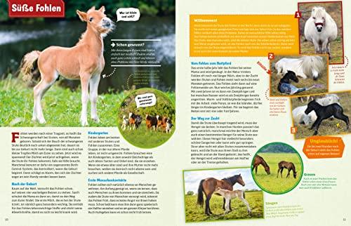 WAS IST WAS Pferde und Ponys: Reiten, Zucht und Pferdesprache (WAS IST WAS Edition) - 8