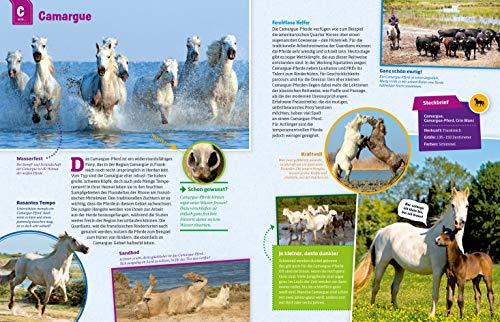 WAS IST WAS Pferde und Ponys: Reiten, Zucht und Pferdesprache (WAS IST WAS Edition) - 10