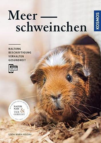 Meerschweinchen: Haltung, Beschäftigung, Verhalten und Gesundheit
