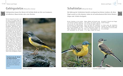 Vögel zu Gast im Garten: Beobachten, bestimmen, schützen (inkl. CD) - 5