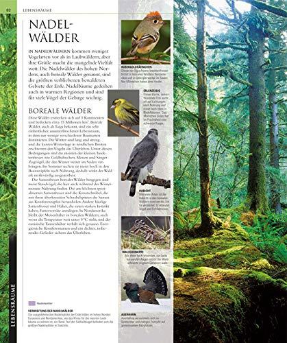 Vögel: Die große Bild-Enzyklopädie mit über 1200 Arten und 5000 Abbildungen - 2