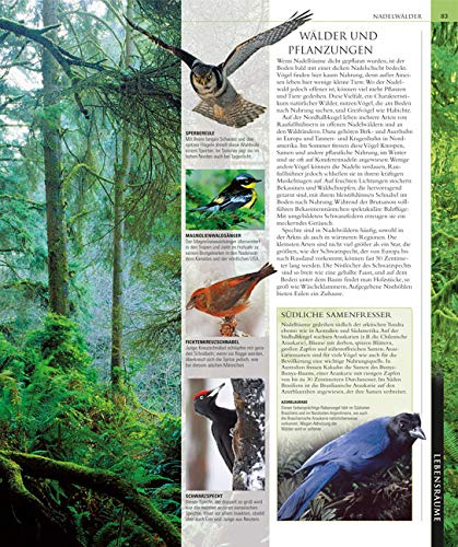 Vögel: Die große Bild-Enzyklopädie mit über 1200 Arten und 5000 Abbildungen - 3