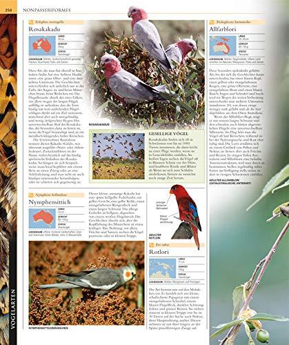 Vögel: Die große Bild-Enzyklopädie mit über 1200 Arten und 5000 Abbildungen - 4