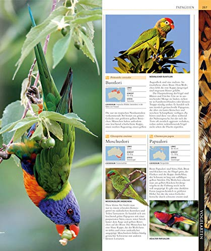 Vögel: Die große Bild-Enzyklopädie mit über 1200 Arten und 5000 Abbildungen - 5