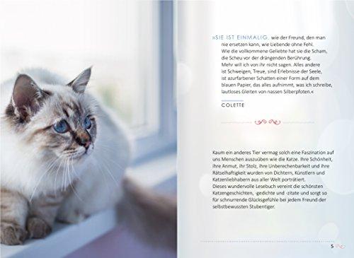 Das Glück kommt auf vier Pfoten: Die schönsten Katzengeschichten - 3