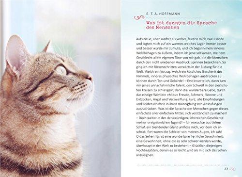 Das Glück kommt auf vier Pfoten: Die schönsten Katzengeschichten - 6