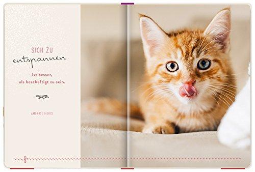 Einfach mal abhängen: Entspannung für Katzenfreunde - 3