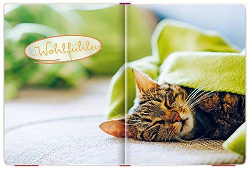 Einfach mal abhängen: Entspannung für Katzenfreunde - 5