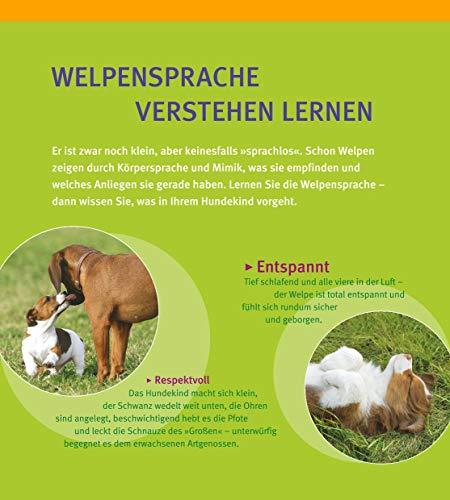 Welpen-Erziehung: Der 8-Wochen-Trainingsplan für Welpen. Plus Junghund-Training vom 5. bis 12. Monat (GU Tier Spezial) - 2