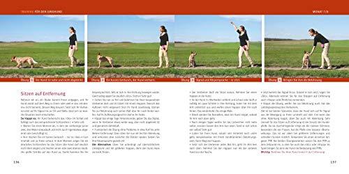 Welpen-Erziehung: Der 8-Wochen-Trainingsplan für Welpen. Plus Junghund-Training vom 5. bis 12. Monat (GU Tier Spezial) - 8