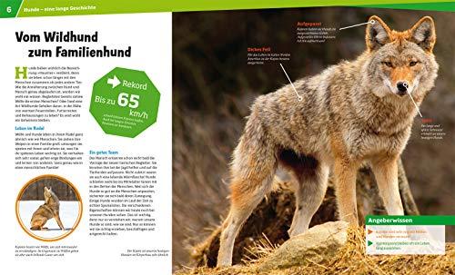 WAS IST WAS Band 11 Hunde. Helden auf vier Pfoten (WAS IST WAS Sachbuch, Band 11) - 3