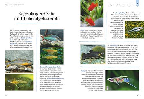 Faszinierendes Aquarium: So fühlen sich die Fische wohl. Mit Eltern-Tipps (GU Mein Heimtier) - 11