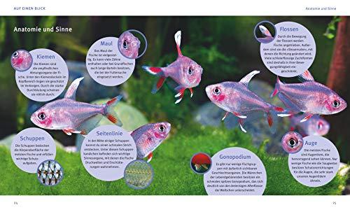 Aquarien – Spaß für Kinder: Spannende Unterwasserwelt (GU Tierratgeber) - 7
