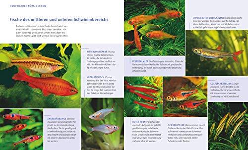 Aquarien – Spaß für Kinder: Spannende Unterwasserwelt (GU Tierratgeber) - 9