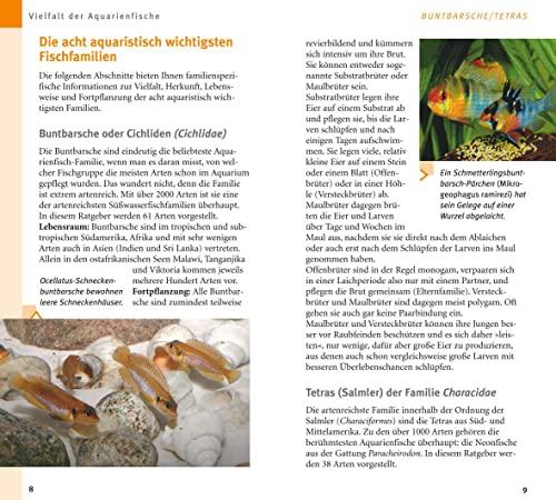 Aquarienfische von A bis Z: Über 300 beliebte Süßwasserfische. Mit schönen Kleinstfischen fürs Nano. (GU Der große Kompass) - 6