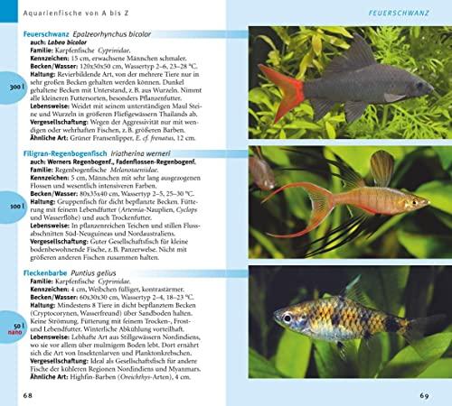 Aquarienfische von A bis Z: Über 300 beliebte Süßwasserfische. Mit schönen Kleinstfischen fürs Nano. (GU Der große Kompass) - 5