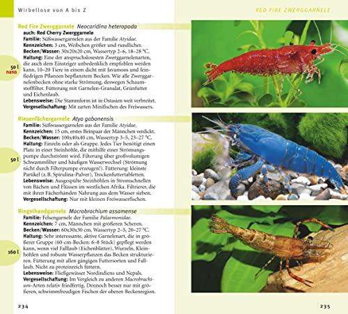 Aquarienfische von A bis Z: Über 300 beliebte Süßwasserfische. Mit schönen Kleinstfischen fürs Nano. (GU Der große Kompass) - 2