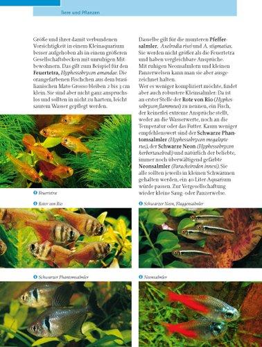 Kleine Aquarien: Extra: Nano-Aquarien - 8