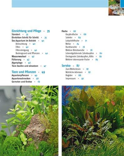Kleine Aquarien: Extra: Nano-Aquarien - 3