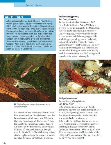 Kleine Aquarien: Extra: Nano-Aquarien - 9