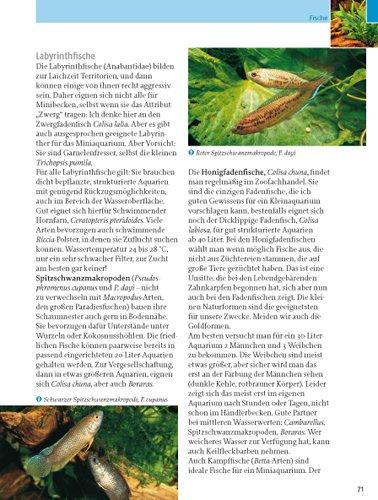 Kleine Aquarien: Extra: Nano-Aquarien - 17