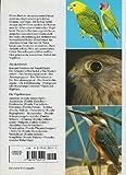 Das grosse Vogelbuch. Die Vögel Europas und der Welt - 2