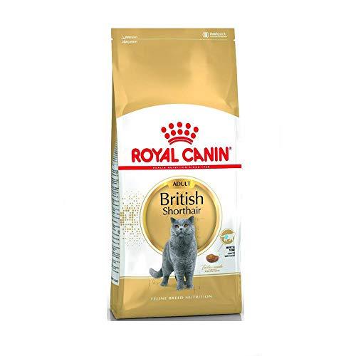 Royal Canin Feline British Shorthair, 1er Pack (1 x 10 kg Beutel) - Katzenfutter