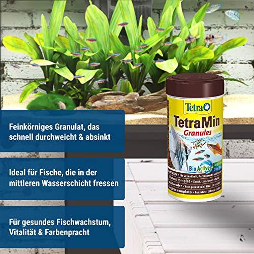 TetraMin Granules (Hauptfutter in Granulatform für alle kleinen Zierfische wie z.B. Salmler und Barben), 250 ml Dose - 3